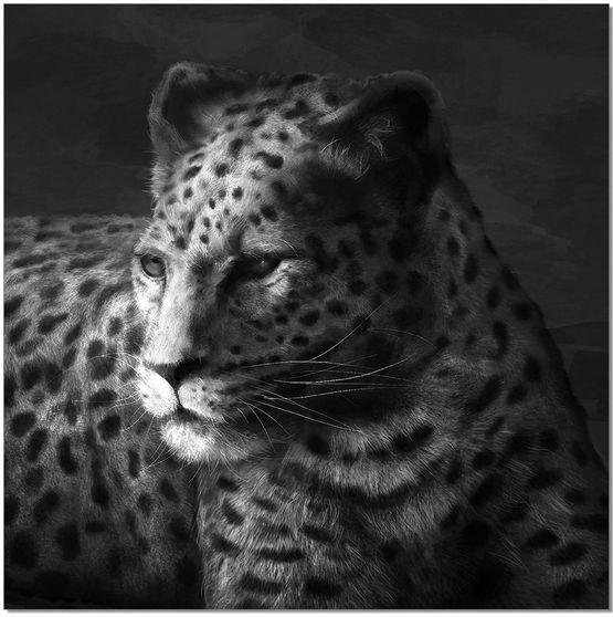 Cheetah premum acrylic wall art