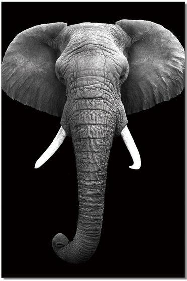 Elephant premum acrylic wall art