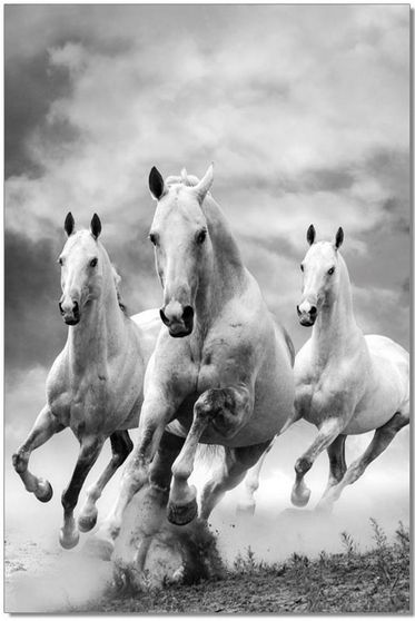 Galloping horses premum acrylic wall art